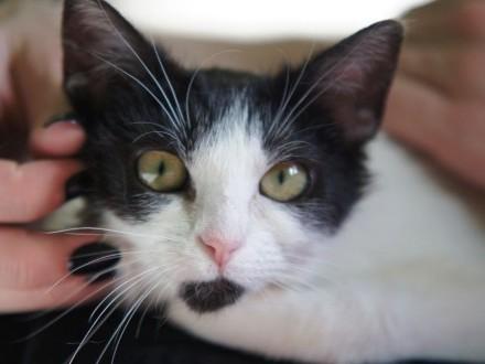 Dilajla - porzucona kotka szuka prawdziwego domu