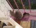 Osiatkowania balkonów i okien dla bezpieczeństwa kotów -Śląsk,  śląskie Sosnowiec