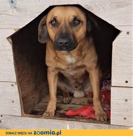 ADRIAN - przerażony, wrażliwy psiak w schronisku, prosi o DOM!,  mazowieckie Warszawa