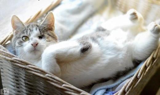 5 miesięczny Pirat  przyjazny  grzeczny KOCUREK adopcja   Koty pospolite cała Polska