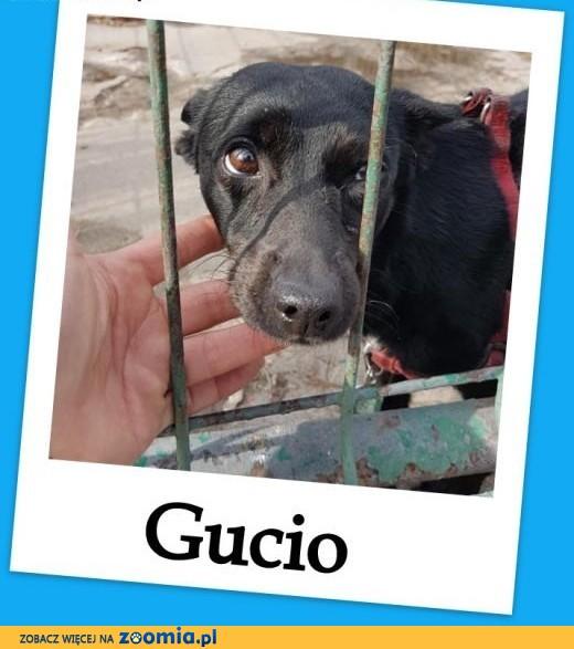Zagubiony w schronisku,malutki 4 kg,sympatyczny psiaczek GUCIO.Adopcja.,  warmińsko-mazurskie Olsztyn