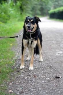 Elza, młoda, zakochana w swoim człowieku! Adoptuj super psa!