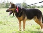 Fred - Cudny psiak czeka na kochający dom,  mazowieckie Warszawa