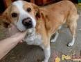 MILUTKI-bardzo kochany, pogodny, miły psiak szuka domu, adopcja
