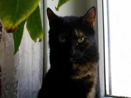 Koteczka Marunia szuka domu