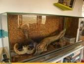 boa salmon contructor + terrarium + mata grzewcza