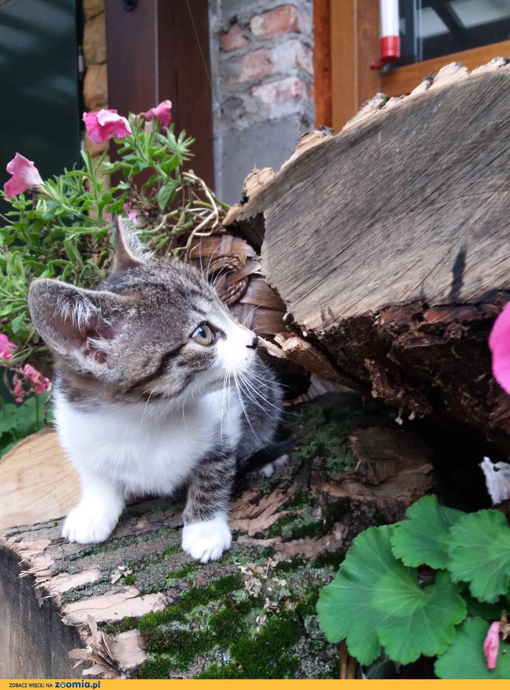 Koteczka Ella szuka domu