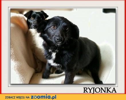 Młoda łagodna delikatna tulaśna malutka 6 kg sunia RYJONKA_Adopcja_