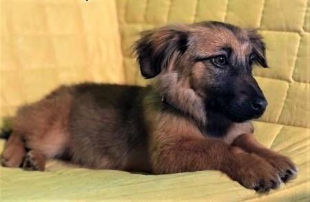 MIMI - 6 miesięczna  kochana szczeniaczka szuka domu   mazowieckie Warszawa
