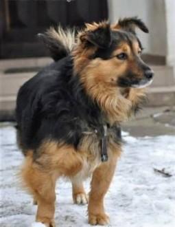 BURSZTYN - niewielki psiak  od szczeniaka na łańcuchu  SZUKA DOMU!   małopolskie Kraków