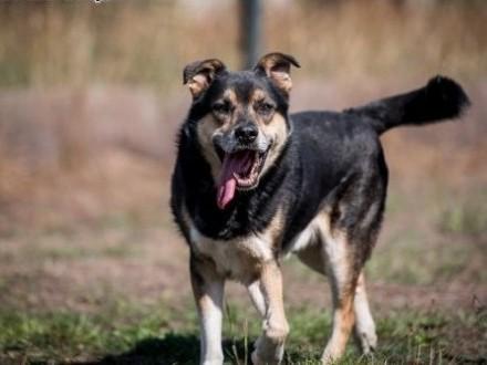 BERCIK - pies przez wieeelkie P! Adoptuj go - pokocha Cię :)   małopolskie Kraków