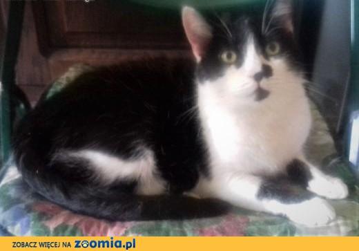 Koty radosne szukają domów  ,  mazowieckie Warszawa