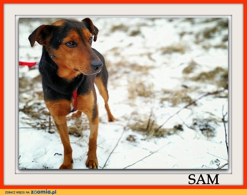 Średnio aktywny,przyjazny,kontaktowy,szczepiony piesek SAM_Adopcja_