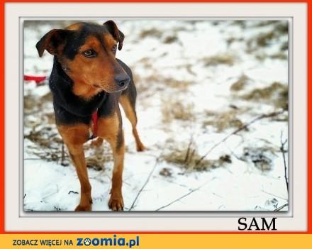 Średnio aktywny przyjazny kontaktowy szczepiony piesek SAM_Adopcja_