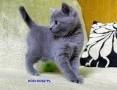 'https://koty-kartuskie.pl KOCI KOSZ*PL