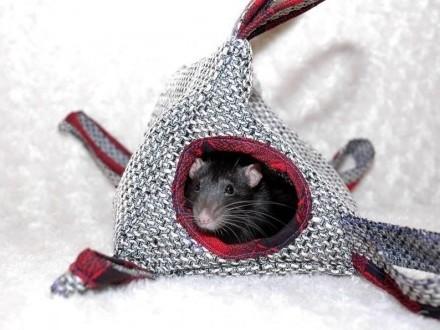 hamak domek dla gryzonia szczur koszatniczka chomik fretka