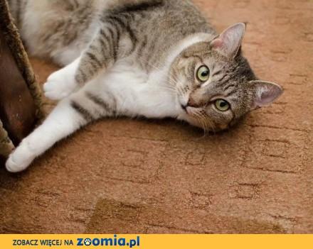 Mika  spokojna  kochana koteczka szuka domu  Piotrków Trybunalski