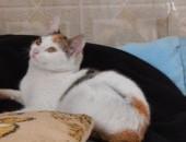 Dwie półroczne kotki, wysterylizowane, do adopcji razem lub osobno