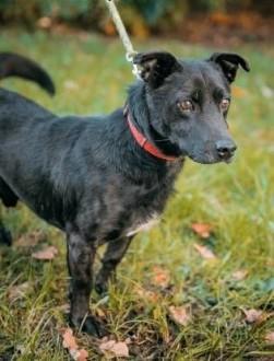 KUKI - cudowny  wpatrzony w człowieka psiak szuka domu   mazowieckie Warszawa