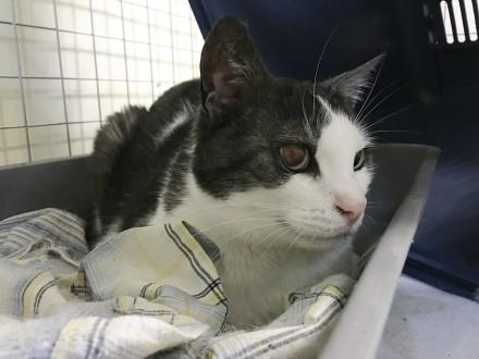 Filemon - kot  który stracił wszystko