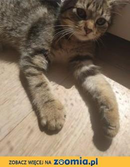 Kociak Emma szuka kochającej rodziny!,  wielkopolskie Poznań