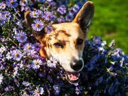 TOFFIK-szaleństwo miłości w psiej niepełnosprawności