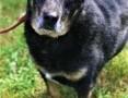 'KABANOS - pies wyjątkowy, kocha ludzi, dzieci; do adopcji,  małopolskie Kraków