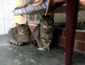 Bo koty są różne___