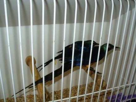 Ptaki egzotyczne - Zwolle