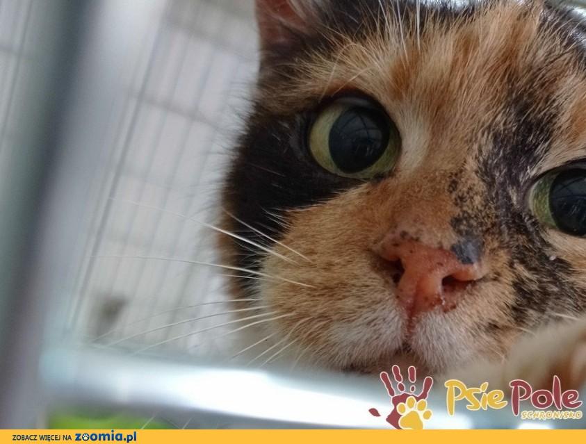HUMORKA-śliczna koteczka szuka kochającego domu, adopcja