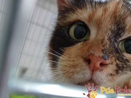 HUMORKA-śliczna koteczka szuka kochającego domu  adopcja