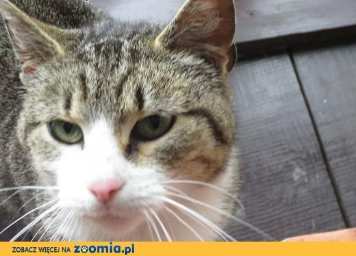 Młoda bardzo fajna kotka szuka schronienia,  mazowieckie Warszawa