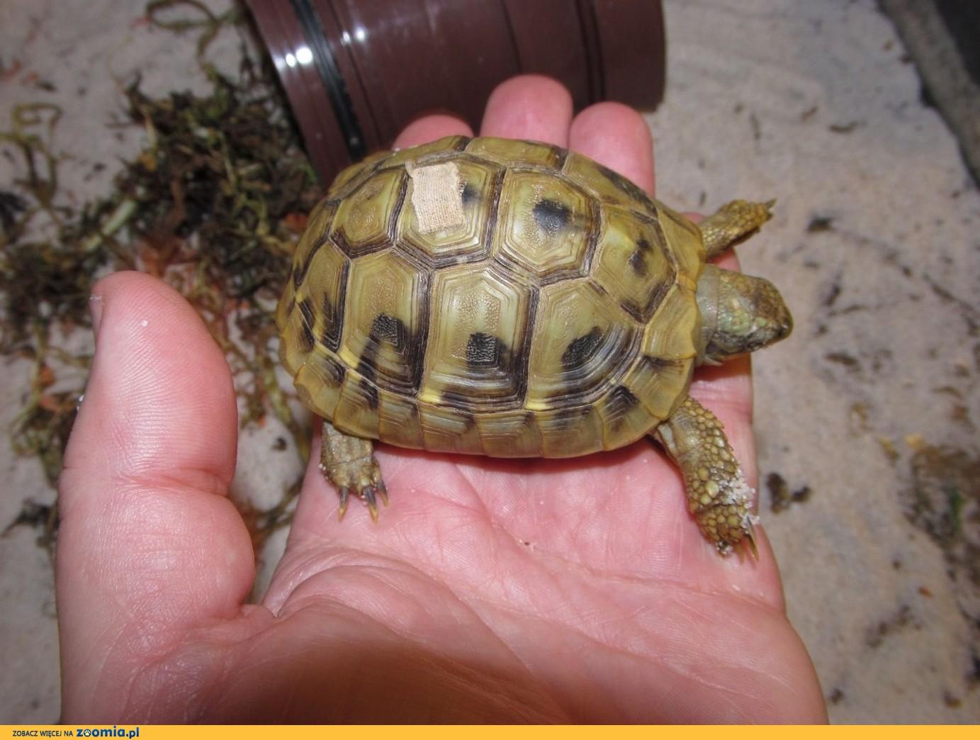 Żółwie lądowe i wodne