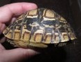 'Żółwie lądowe i wodne