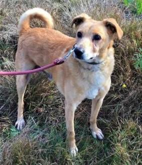 KARMEL - kochany  oddany psiak szuka domu   mazowieckie Warszawa