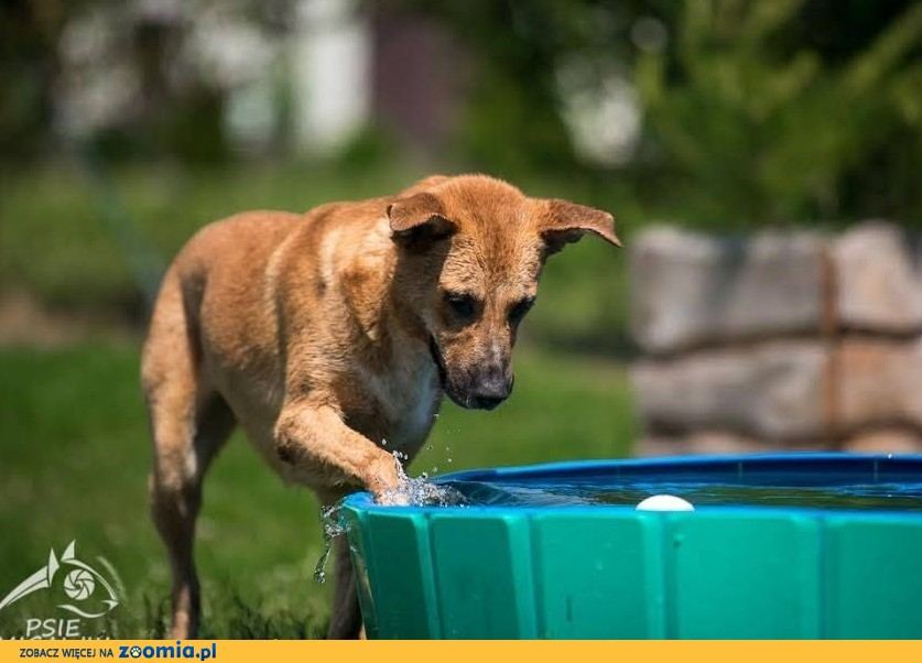 LORI - super psiaka chcesz? gdzie go znaleźć już wiesz! :)