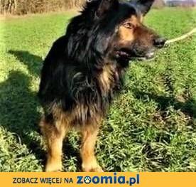 DRAKO - ma kilka dni na znalezienie domu, potem czeka go śmierć,  mazowieckie Warszawa