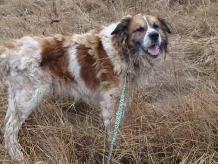 Bardzo zaniedbany pies BENIO - do pilnej adopcji!