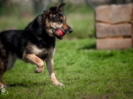 LEO - super pies - nad adopcją nie myśl długo tylko go do domu bierz :)   mazowieckie Warszawa