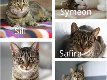 Młode  kontaktowe kotki  po przejściach  szukają kochającego domu