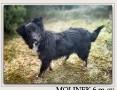 6 m-czny szczeniak,wesoły,towarzyski,kontaktowy psiak MOLINEK.Adopcja.