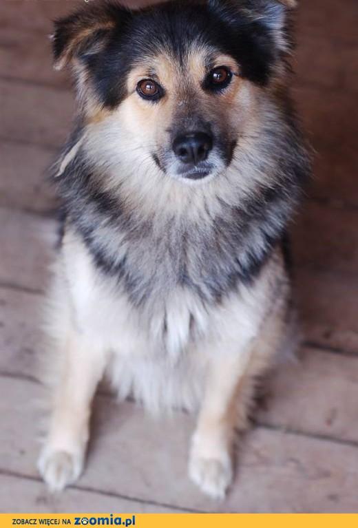 Kalmo - uroczy, spokojny psiak szuka kochającej rodziny.,  Kundelki cała Polska
