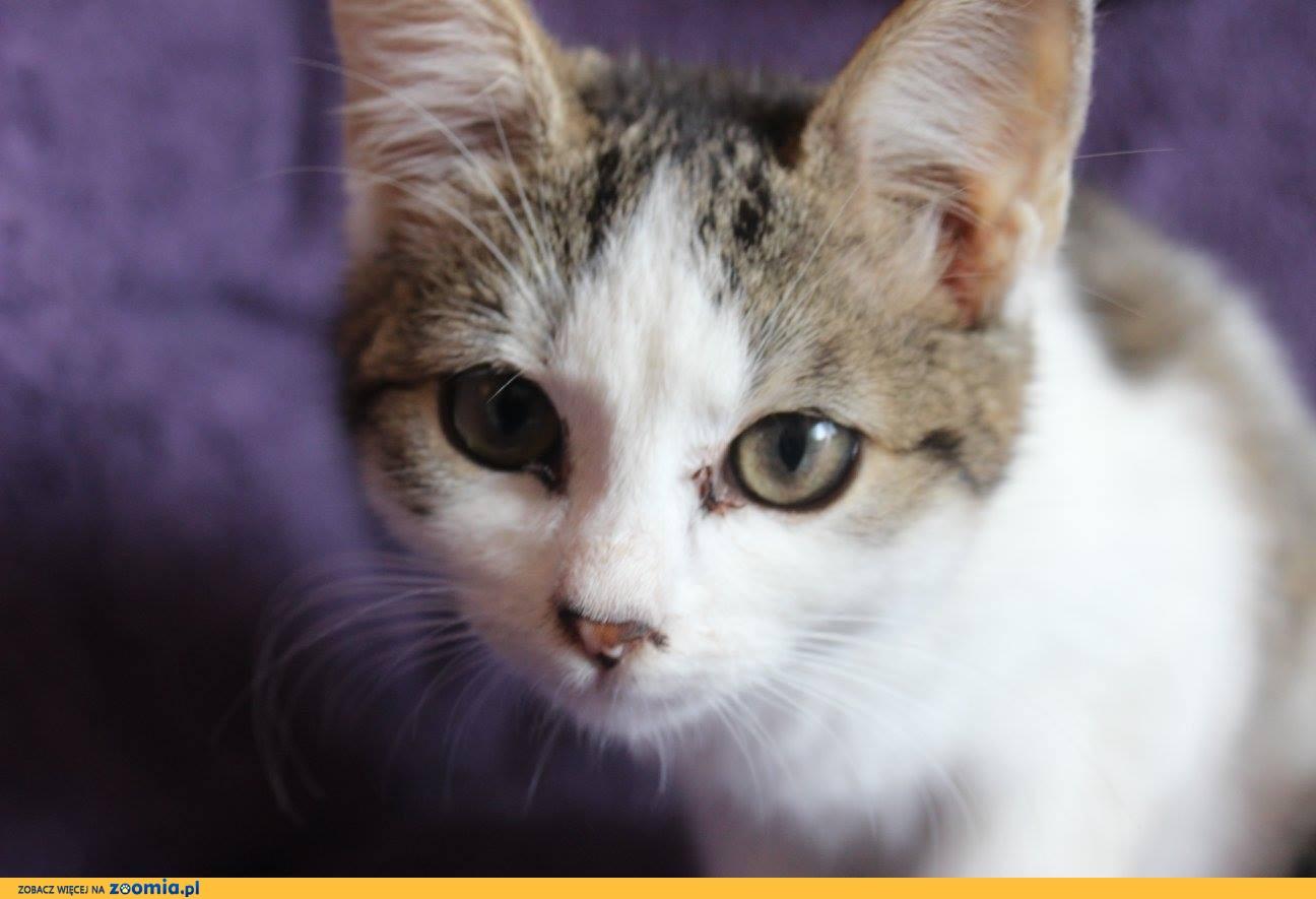 Rebeka, wspaniała 12 tygodniowa koteczka do adopcji!