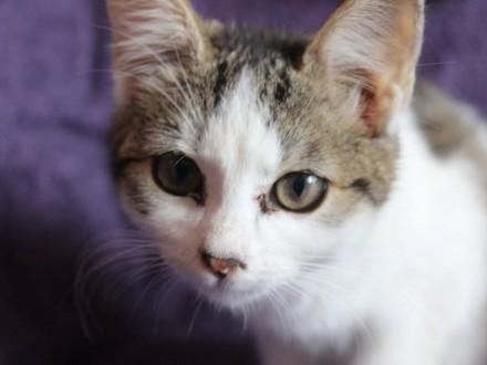 Rebeka  wspaniała 12 tygodniowa koteczka do adopcji!
