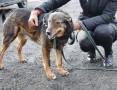 Niezwykły pies, który uwielbia ludzi - Aslan,  świętokrzyskie Kielce