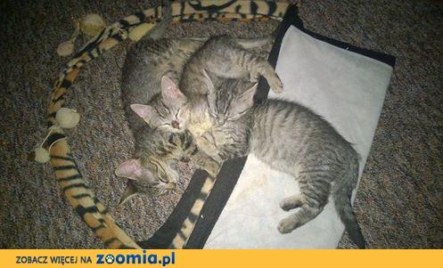 Cztery kociaki