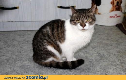 Dorosła kotka Merida szuka domu!,  dolnośląskie Wrocław