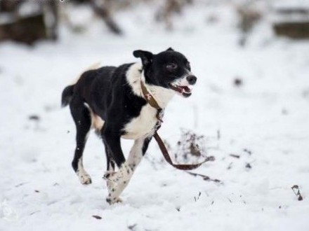 BOBIK super pies poprostu chcesz go w domku mieć   mazowieckie Warszawa