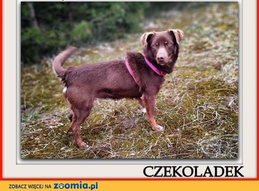 Mały 8 kg,wesoły,łagodny,rodzinny,szczepiony psiak CZEKOLADEK.Adopcja.,  mazowieckie Warszawa