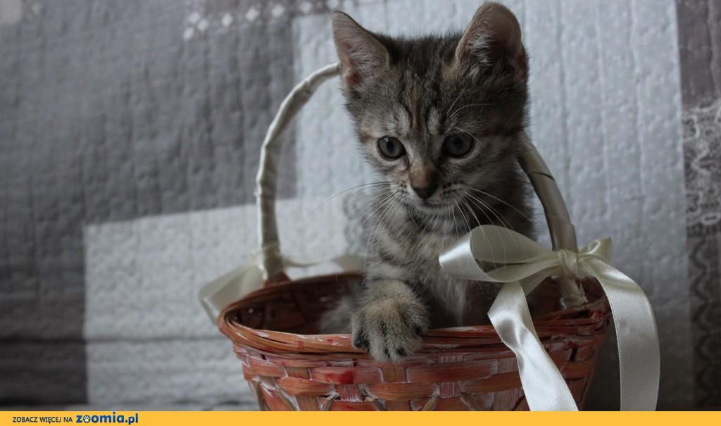Mała kotka Pianka szuka domu